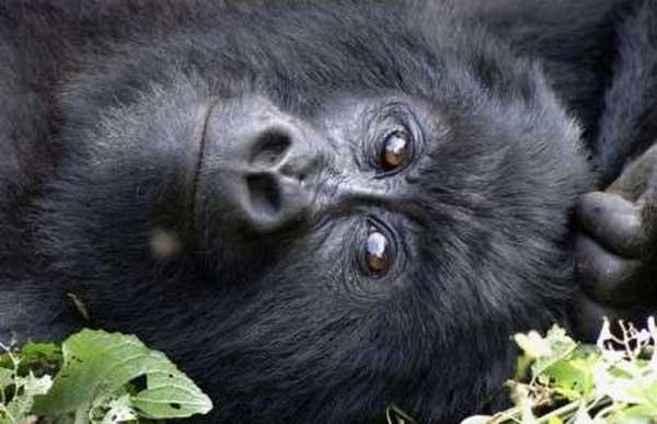 Animales en peligro de extinción (fotos)